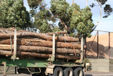 Log semi truck trailer poster