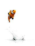Jumping Clownfish