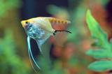 Fish swimming in Aquarium poster