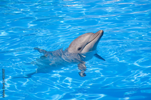 Deurstickers Dolfijn A happy Bottlenose Dolphin