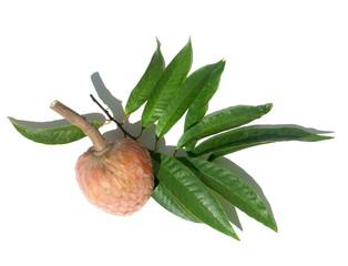 feuilles et fruit