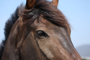Close up of a horse in the wind.