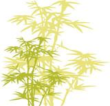 Fototapety bamboo tree
