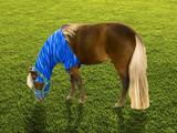 Miniature horse grazing poster