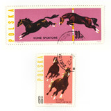 Horses on collectible stamps poster