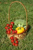 The basket with various costs to vegetables on a grass. poster