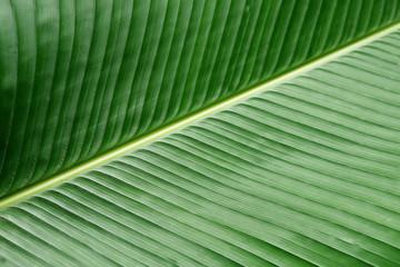 textura verde hoja de platano