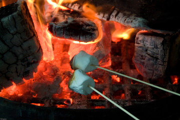 Roasting Marshmallows over an open campfire