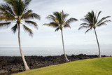 Hawaiian Palms and Beach poster