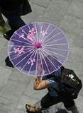 lady walking with pink parasol umbrella poster