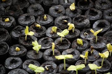 Gardening - growing plants