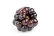 Single blackberry against white background