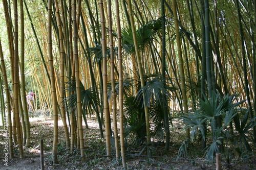 Papiers peints Bambou bambou
