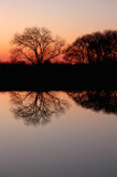 Bare Trees at Sunset poster
