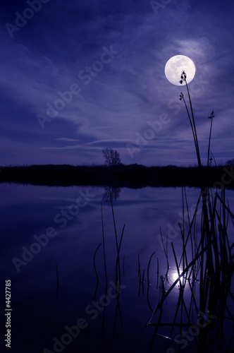 Moon And Reeds