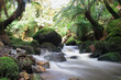 Urwald - Wasserfall - waterfall