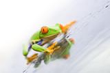 Fototapete Natur - Grün - Reptilien / Amphibien