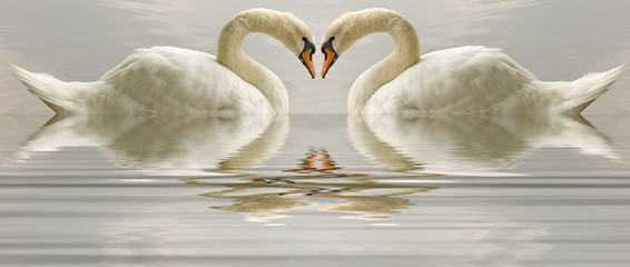 Swan heart with reflection reflected in water
