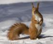 Quadro squirrel