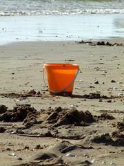 sceau sur la plage