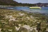 Moss Rocks at Los Gatos Beach poster
