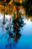 absract reflection monet poster