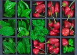 Red chili peppers and herbs poster