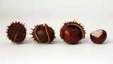 4 chestnuts on white background