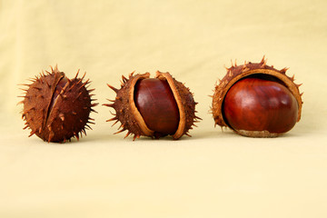 3 chestnuts on sepia background