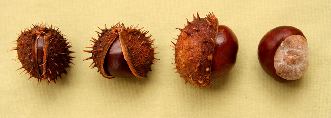 chestnuts on sepia background