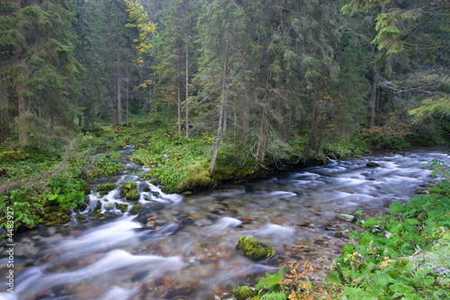 Mountain Streams In The Forest