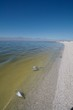 Dead fish floating Salton Sea