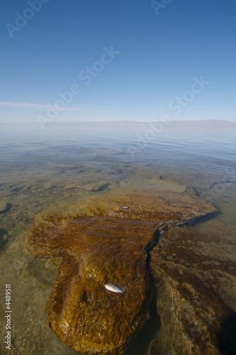 Salt Clumps Salton Sea