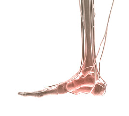 Foot Pain X-ray