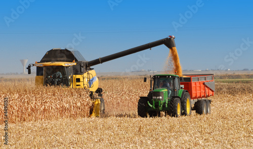 récolte du maïs à grains