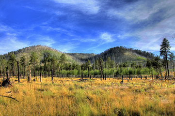 Recovering from a Forest Fire - Coconino National Forest Arizona
