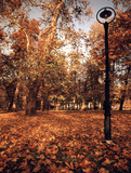 Autumn in the park of Skopje city poster