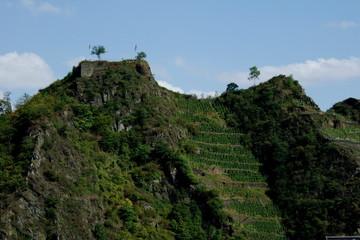 Weinanbau an Steilhängen bei Mayschoß an der Ahr