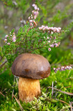 autumn mushroom in forest under heather flower