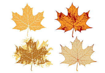 maple grunge leaves