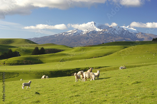 New Zealand Scenery - 4508105