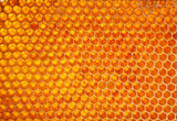 Honeycomb wax cell poster
