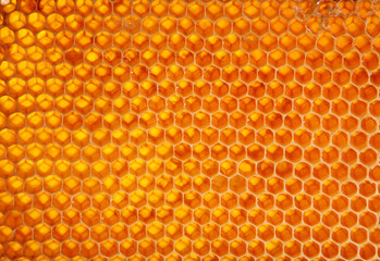 Honeycomb wax cell