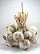 roleta: Garlic