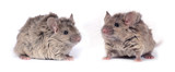 two little wild mice poster