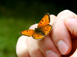 Orange butterfly on humans hand.