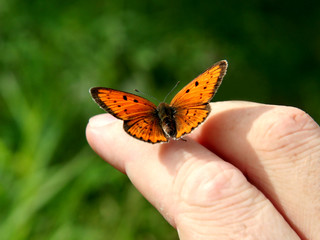 Orange butterfly on human hand.