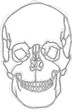 human skull scribble style drawing