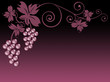 Tralcio di vite con grappoli d'uva su sfondo bordò