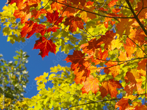 canvas print picture couleurs parc de la mauricie